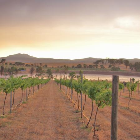 Pyrenees Vineyard